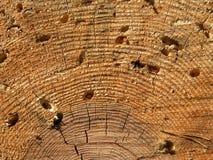 διαβρώστε τον κορμό δέντρω& Στοκ φωτογραφία με δικαίωμα ελεύθερης χρήσης
