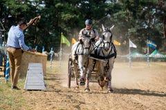 Διαγωνισμός αλόγων με τα άλογα και τη μεταφορά στην μπροστινή άποψη αρχικών γραμμών Στοκ Φωτογραφίες