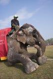 Διαγωνισμός ομορφιάς - φεστιβάλ ελεφάντων, Chitwan 2013, Νεπάλ Στοκ Εικόνες