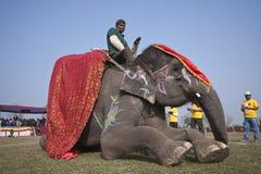 Διαγωνισμός ομορφιάς - φεστιβάλ ελεφάντων, Chitwan 2013, Νεπάλ Στοκ Εικόνα