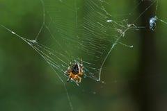 Διαγώνια αράχνη γραμμάτων Τ στο δίκτυό του Στοκ Εικόνα