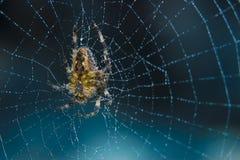 Διαγώνια αράχνη στο χρήσιμο έντομο κήπων Ιστού Στοκ Εικόνα