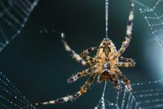 Διαγώνια αράχνη στο χρήσιμο έντομο κήπων Ιστού Στοκ φωτογραφίες με δικαίωμα ελεύθερης χρήσης