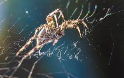Διαγώνια αράχνη στο χρήσιμο έντομο κήπων Ιστού Στοκ φωτογραφία με δικαίωμα ελεύθερης χρήσης