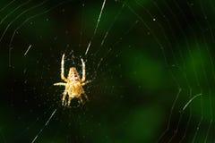 Διαγώνια αράχνη Στοκ εικόνες με δικαίωμα ελεύθερης χρήσης