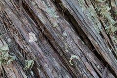 Διαγώνια ξύλινη σύσταση Στοκ Εικόνες