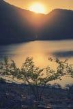 Διαγώνιο ηλιοβασίλεμα διαδικασίας πέρα από τη λίμνη και το δέντρο Στοκ Εικόνα