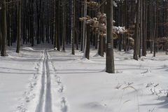 διαγώνιο σκι μονοπατιών χ&o Στοκ Φωτογραφίες