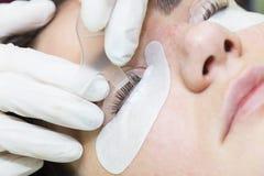Διαδικασία για τις επεκτάσεις eyelash, eyelashes lamin στοκ φωτογραφία