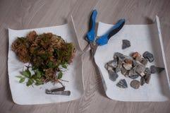 Διαδικασία το μπονσάι την άνοιξη Καθαρίζοντας treetop από τους λανθασμένους κλαδίσκους με το ψαλίδι στοκ εικόνες