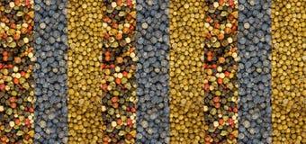 Διαδοχική σειρά των κόκκινων άσπρων πράσινων σπόρων των Μαύρων και κορίανδρου πιπεριών μιγμάτων Στοκ Εικόνες