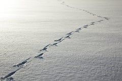 διαδρομές ελαφιών Στοκ φωτογραφίες με δικαίωμα ελεύθερης χρήσης