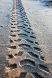 Διαδρομές ροδών στην άμμο Στοκ Εικόνα