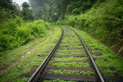 Διαδρομές σιδηροδρόμων στην πράσινη ζούγκλα Στοκ φωτογραφίες με δικαίωμα ελεύθερης χρήσης