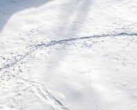 Διαδρομές στο χιόνι Στοκ Εικόνα
