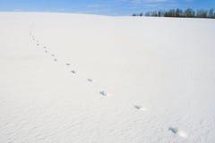 διαδρομές χιονιού Στοκ Εικόνες