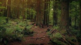 Διαδρομή μέσω των ξύλων στο ηλιοβασίλεμα απόθεμα βίντεο