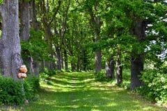 Διαδρομή πεζοπορίας του Castle Alatskivi Στοκ εικόνες με δικαίωμα ελεύθερης χρήσης