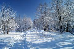 Διαδρομή που αφήνεται από τα σκι στο όμορφο ξύλο το χειμώνα Στοκ Φωτογραφία