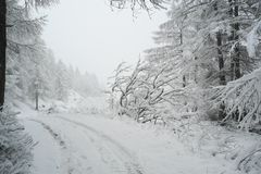 Διαδρομή ροδών στο χιονισμένο δρόμο μέσω του χειμερινού κωνοφόρου δάσους στοκ εικόνα