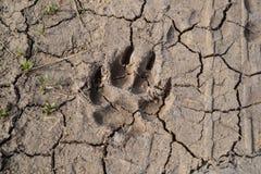 Διαδρομή σκυλιών στη λάσπη - κλείστε επάνω στοκ φωτογραφίες με δικαίωμα ελεύθερης χρήσης