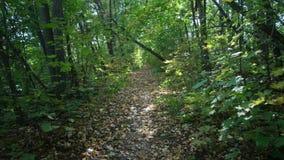 Διαδρομή στο δάσος στην κίνηση απόθεμα βίντεο