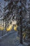 Διαδρομή στο χειμερινό πάρκο στοκ εικόνες