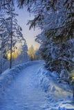 Διαδρομή στο χειμερινό πάρκο στοκ φωτογραφία με δικαίωμα ελεύθερης χρήσης