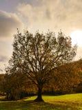 διαθέσιμο διάνυσμα δέντρων απεικόνισης φθινοπώρου Στοκ φωτογραφία με δικαίωμα ελεύθερης χρήσης