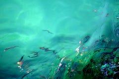 Διαθλασμένα ψάρια στο τυρκουάζ νερό στοκ εικόνα με δικαίωμα ελεύθερης χρήσης