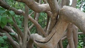 Διακλάδωση στο δέντρο φιλμ μικρού μήκους