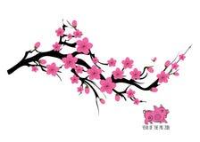 Διακλαδιμένος απεικόνιση δέντρων ανθών κερασιών της Ιαπωνίας Ιαπωνική κάρτα πρόσκλησης με τον ασιατικό ανθίζοντας κλάδο δαμάσκηνω απεικόνιση αποθεμάτων