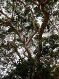 Διακλαδισμένο βαρύ δέντρο στοκ φωτογραφία