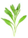 διακλαδιστείτε λίγο πράσινο βγάζει φύλλα Στοκ φωτογραφία με δικαίωμα ελεύθερης χρήσης
