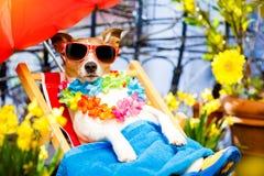 Διακοπές καλοκαιρινών διακοπών σκυλιών στην αιώρα στοκ εικόνα με δικαίωμα ελεύθερης χρήσης