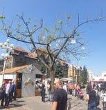 Διακοσμήσεις Πάσχας στο τετράγωνο ένωσης Timisoara Ρουμανία για τις καθολ στοκ εικόνα με δικαίωμα ελεύθερης χρήσης
