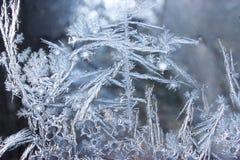 Διακοσμήσεις σε ένα παγωμένο παράθυρο ενθυμίζον των εγκαταστάσεων Στοκ Εικόνες