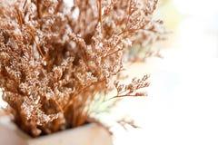 Διακοσμήσεις των μικροσκοπικών άσπρων λουλουδιών στο βάζο στοκ εικόνες