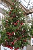 Διακοσμήσεις Χριστουγέννων στα θερμοκήπια των κήπων Longwood Στοκ Εικόνα
