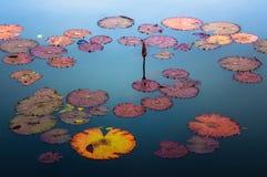 διακοσμήστε τον ελεύθερο χρόνο κήπων φαίνεται λίμνη λωτού στοκ φωτογραφία