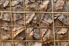 Διακοσμήστε τους τοίχους με τα ξηρά φύλλα και το υπόβαθρο στοκ εικόνες