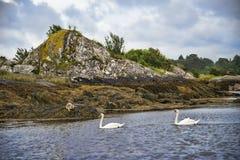 Διακοσμήστε το νησί Στοκ Εικόνα