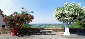 Διακοσμημένα Festively δέντρα για ένα γαμήλιο πλαίσιο το Tuscan landsca Στοκ εικόνες με δικαίωμα ελεύθερης χρήσης