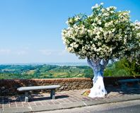 Διακοσμημένα Festively δέντρα για ένα γαμήλιο πλαίσιο το Tuscan landsca Στοκ εικόνα με δικαίωμα ελεύθερης χρήσης