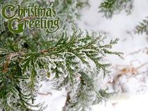 Διακοσμημένη κάρτα χειμερινών συγχαρητηρίων σχεδίου χαιρετισμών Χριστουγέννων κειμένων Στοκ Εικόνες