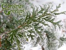 Διακοσμημένη κάρτα χειμερινών συγχαρητηρίων σχεδίου χαιρετισμών Χριστουγέννων κειμένων Στοκ φωτογραφία με δικαίωμα ελεύθερης χρήσης