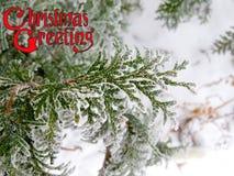 Διακοσμημένη κάρτα χειμερινών συγχαρητηρίων σχεδίου χαιρετισμών Χριστουγέννων κειμένων Στοκ Φωτογραφία