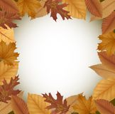 Διακοσμημένο αφίσα σφενδάμνων φύλλα, έμβλημα ή σχέδιο ιπτάμενων Στοκ Φωτογραφία