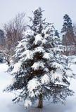 διακοσμημένο δέντρο πεύκ&omega Στοκ Φωτογραφίες