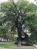 διακοσμημένο δέντρο Στοκ Εικόνα